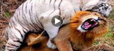 Top 10 Real Animal Fights in Wild African Animal videos