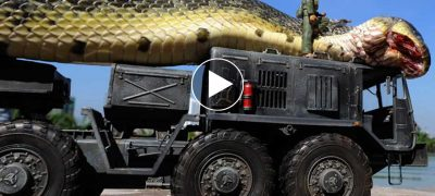 Giant Snake Anaconda Caught in the Red Sea