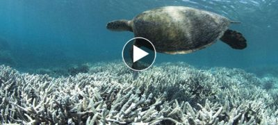 No future for Great Barrier Reef, If This Continue